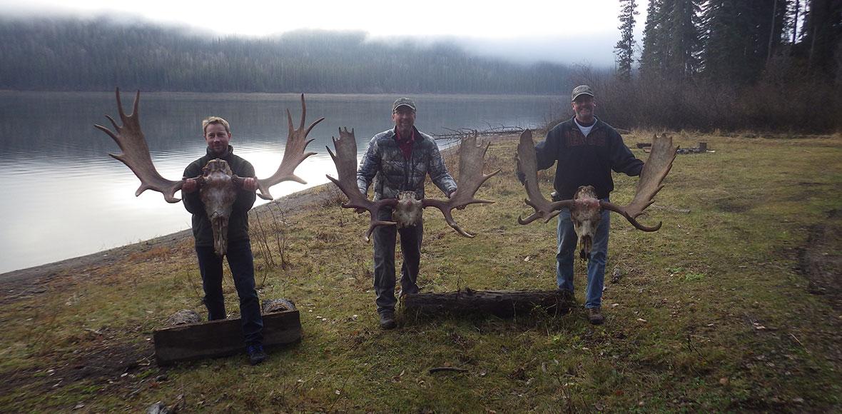 Moose Hunts in BC