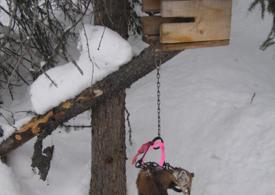 winter trapping 076
